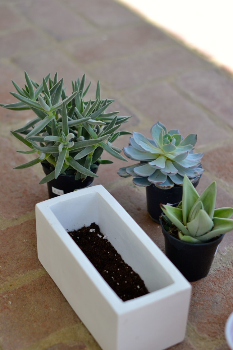 ceramic pot with a little potting soil - how to plant succulents via lovelyluckylife.com