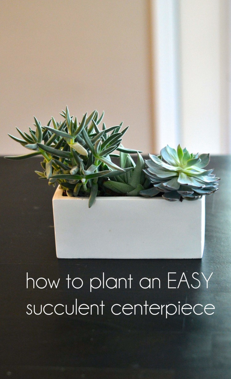 how to plant an easy succulent centerpiece
