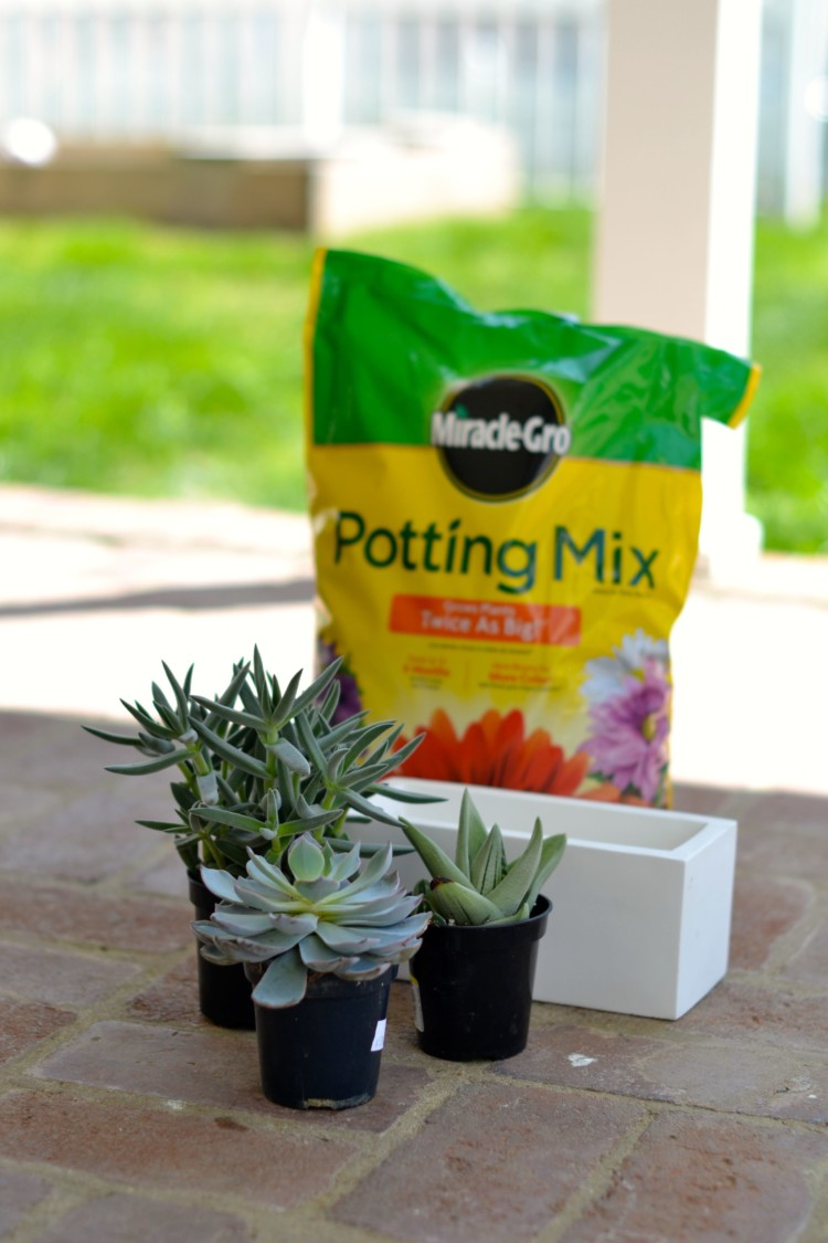 stuff needed to plant succulents