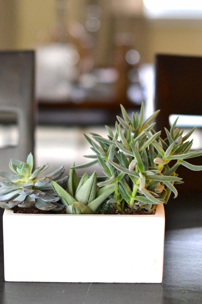 How to Plant Succulents for a Centerpiece