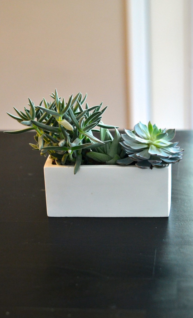 don't you love the mix of tall and short, rough and smooth? how to plant succulents via lovelyluckylife.com