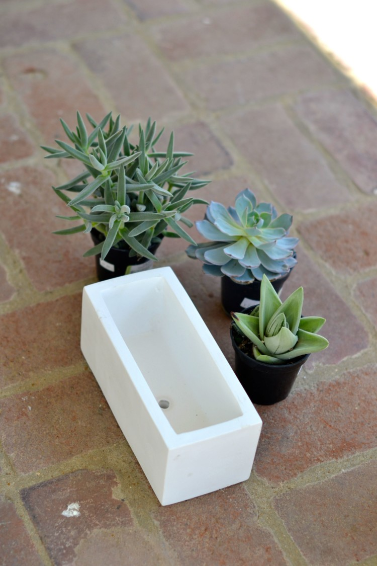 succulents and ceramic - wake sure your planter has a hole for adequate drainage | via lovelyluckylife.com