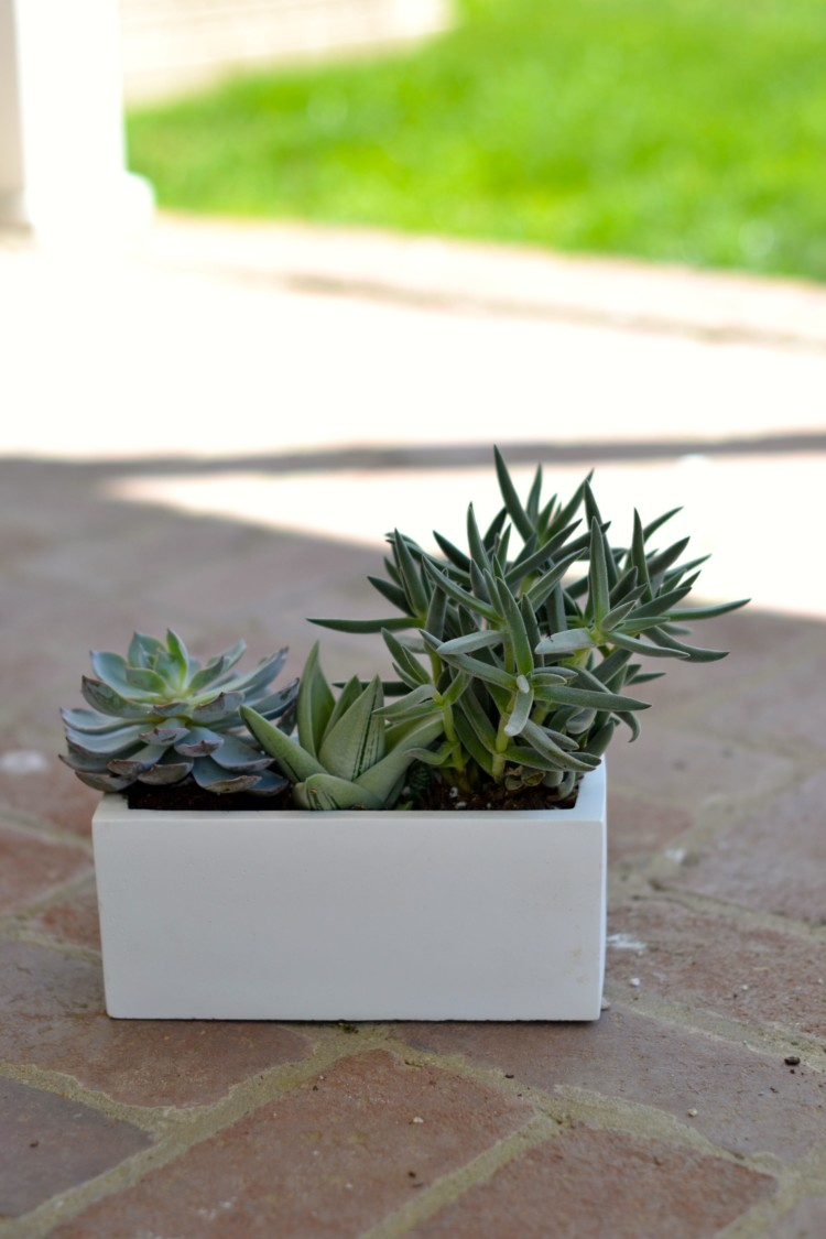 succulents in ceramic pot via lovelyluckylife.com