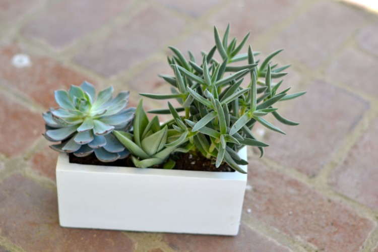 super easy potted succulents via lovelyluckylife.com