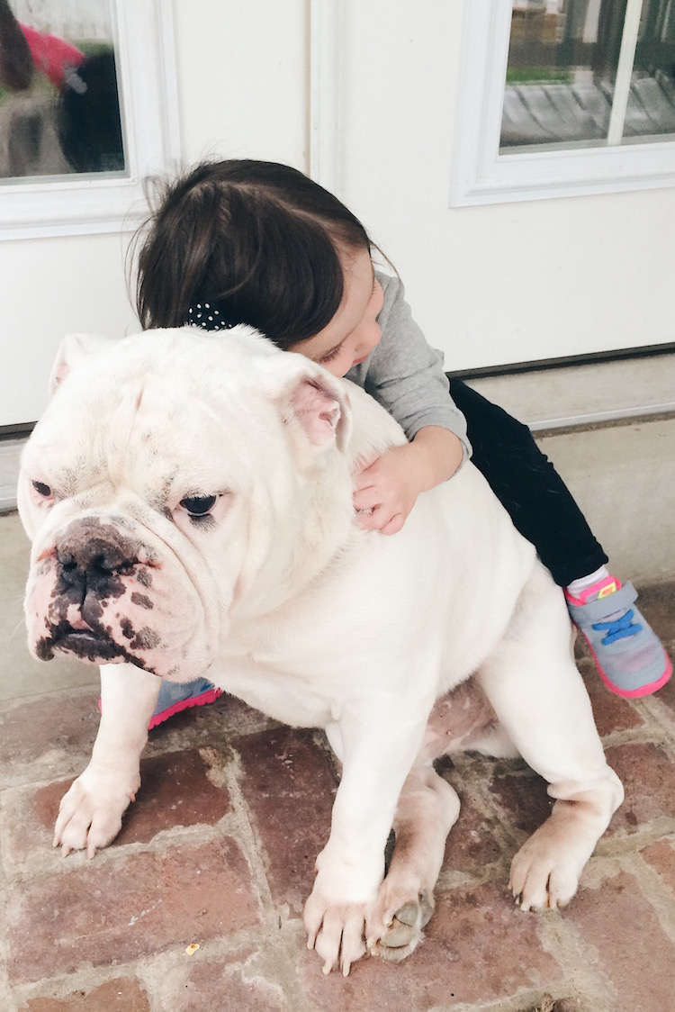 english bulldogs are a family-friendly dog breed