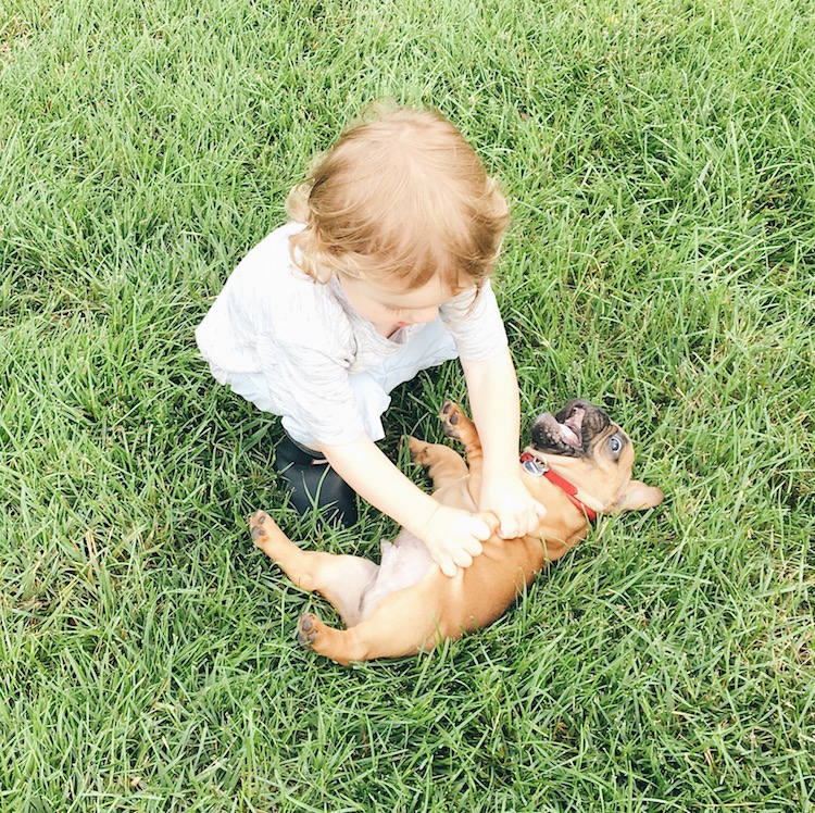 teach your kids to be gentle with your puppy