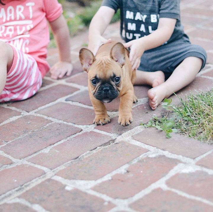 How to Welcome a Puppy with Little Kids at Home