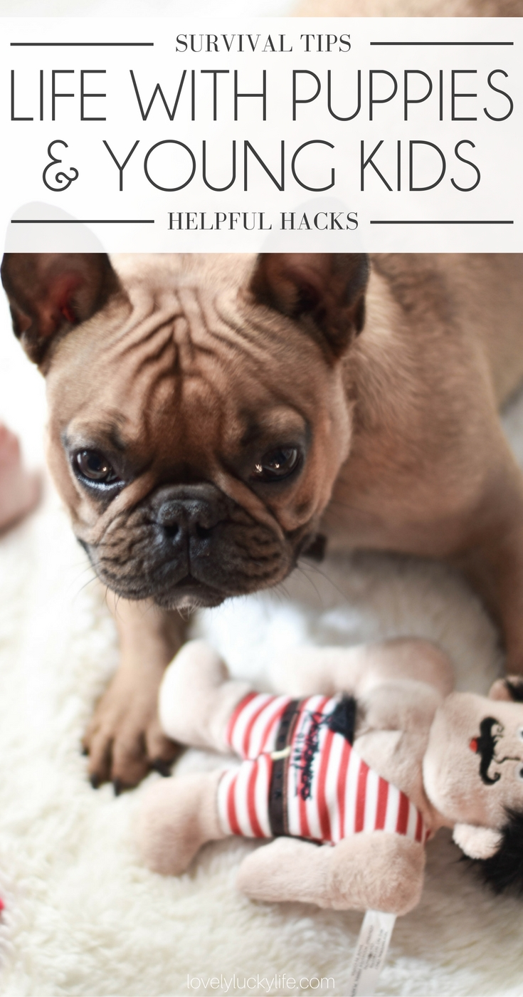 these are the best tips for surviving life with a puppy and small children + the cutest French bulldog puppy!