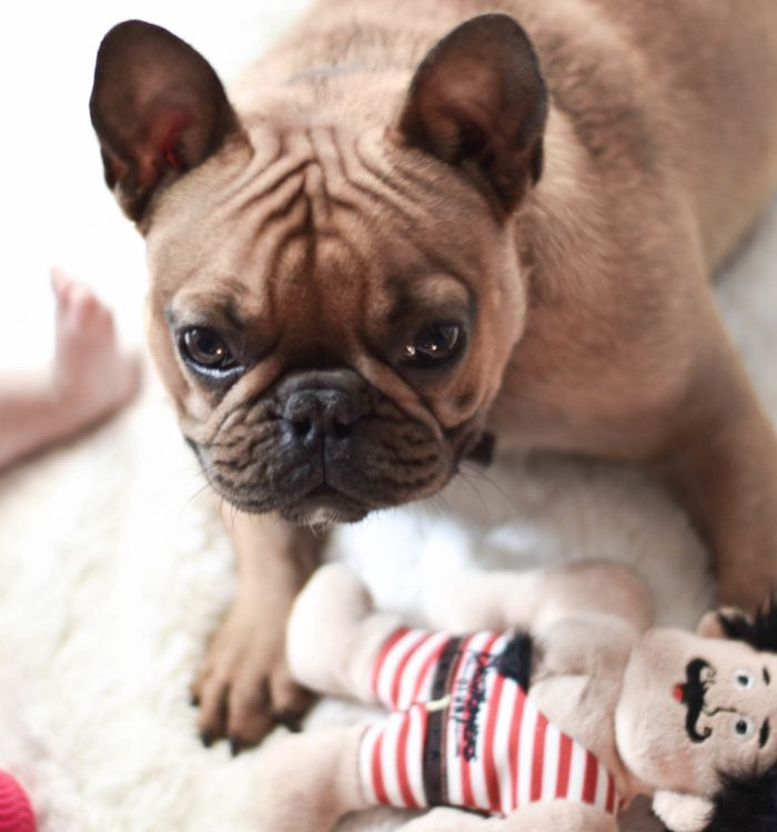 How to Survive Life with a Puppy and Young Kids – Without Going Insane