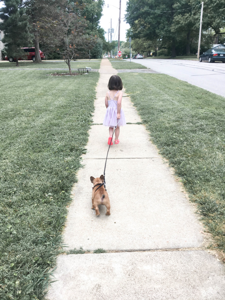 tips for surviving life with a puppy and little kids