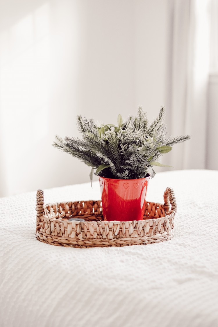 christmas plant and bucket from ikea