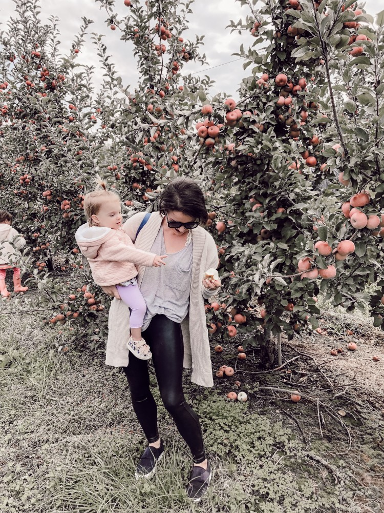 apple picking at Eckert's Farm in Millstadt
