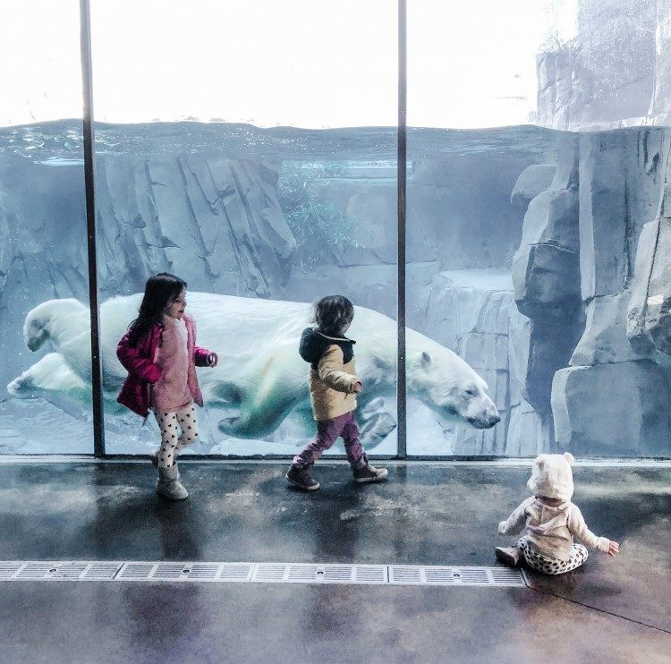 the best things to do in St. Louis with kids